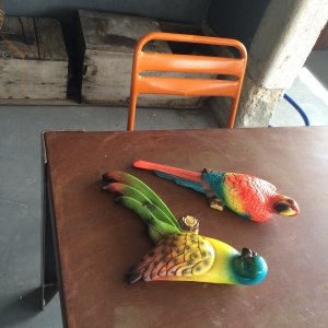 Birds for the terrace